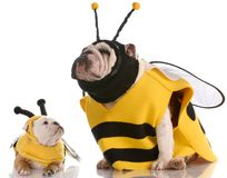 Dog dressed up as matching bees