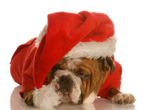 Dog dressed up as santa Royalty Free Stock Photography