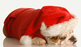 Dog dressed up as santa Royalty Free Stock Photos