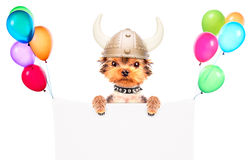 Dog dressed up as a viking with banner Royalty Free Stock Photos