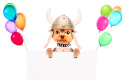 Dog dressed up as a viking with banner Stock Image