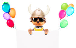 Dog dressed up as a viking with banner Royalty Free Stock Image