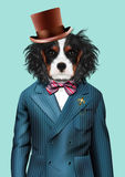 Dog dressed up in blue tuxedo and hat Stock Photos