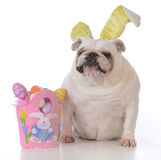 Dog dressed up for easter Royalty Free Stock Photo