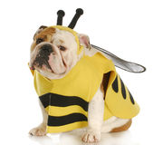 Dog dressed up like a bee Stock Photo