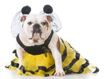Dog dressed up like a bee Royalty Free Stock Photos