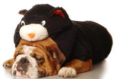 Dog dressed up like black cat Royalty Free Stock Photos