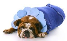 Dog dressed up like a flower Stock Image