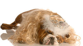 Dog dressed up like princess Royalty Free Stock Image