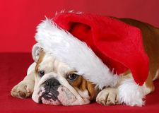 Dog dressed up like santa Royalty Free Stock Images