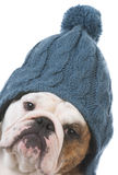 Dog dressed for winter Royalty Free Stock Photo