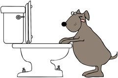 Dog Drinking From Toilet Stock Photos