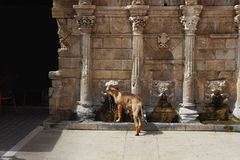 Dog drinking water from a fountain Royalty Free Stock Photography