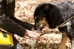 Dog drinking Water Royalty Free Stock Photos