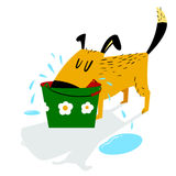 Dog drinks. A sloppy dog drinks water from a bucket and leaves p Royalty Free Stock Image