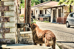 Dog. Drinks water in Greece stock photos