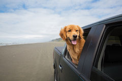 Dog on a drive Royalty Free Stock Image