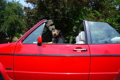 Dog Driving Stock Photography