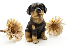 Dog with dry flower Royalty Free Stock Photos