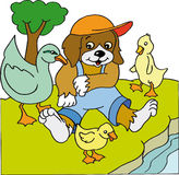 Dog with ducks stock images