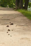 Dog dump. Dog faeces on a walking trail in park stock images