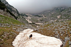 Dog in Durmitor national park Stock Photography