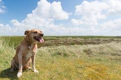 Dog on Dutch island Terschelling Stock Photos