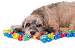 Dog with Easter eggs Royalty Free Stock Image