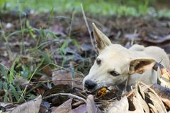 Dog eat  Palm Oil fruit  in the grass on a sunny summer day stock photos