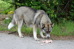 Dog eat on the street Stock Photos
