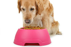Dog eating` Royalty Free Stock Photos