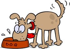 Dog eating. A hungry dog eating from a food bowl, wagging its tail Stock Photo