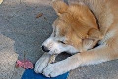 Dog eating Stock Photos