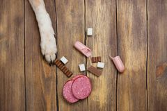 Dog eating banned food. Unhealthy meal for animals Royalty Free Stock Images