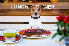Free Dog Eating Cake And Tea At Resataurant Royalty Free Stock Image - 78165056