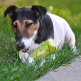 Dog eating Stock Photo