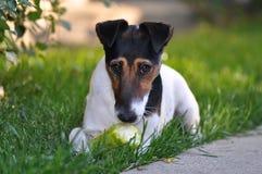 Dog eating Stock Image