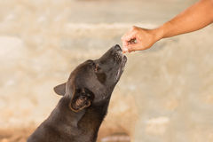 Dog eating food selective focus Royalty Free Stock Photography