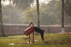 Dog eating from a garbage can Royalty Free Stock Photography