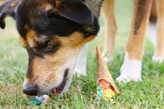 Dog Eating Ice Cream Cone on Ground Stock Images