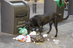 Dog eating litter Royalty Free Stock Photos