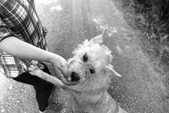 Dog eating out of hand Stock Images