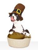 Dog Eating Thanksgiving Dinner Royalty Free Stock Image
