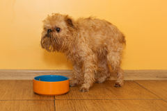 Dog  eats from the bowl Royalty Free Stock Photos