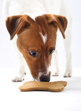 Dog eats food from a bowl Royalty Free Stock Images