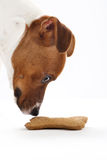 Dog eats food from a bowl Stock Photos