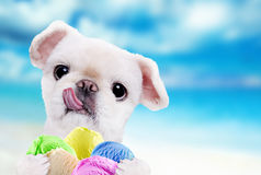 Dog eats ice cream. Royalty Free Stock Photography