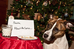 Dog Eats Santas Cookies. A cute dog that ate the cookies left out for Santa Royalty Free Stock Photos