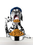 Dog eats with a spoon from a bowl. Isolated on white background stock images
