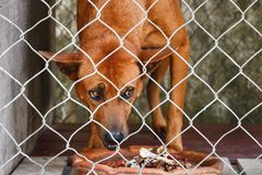 Dog eattiing in Dog cage stock images